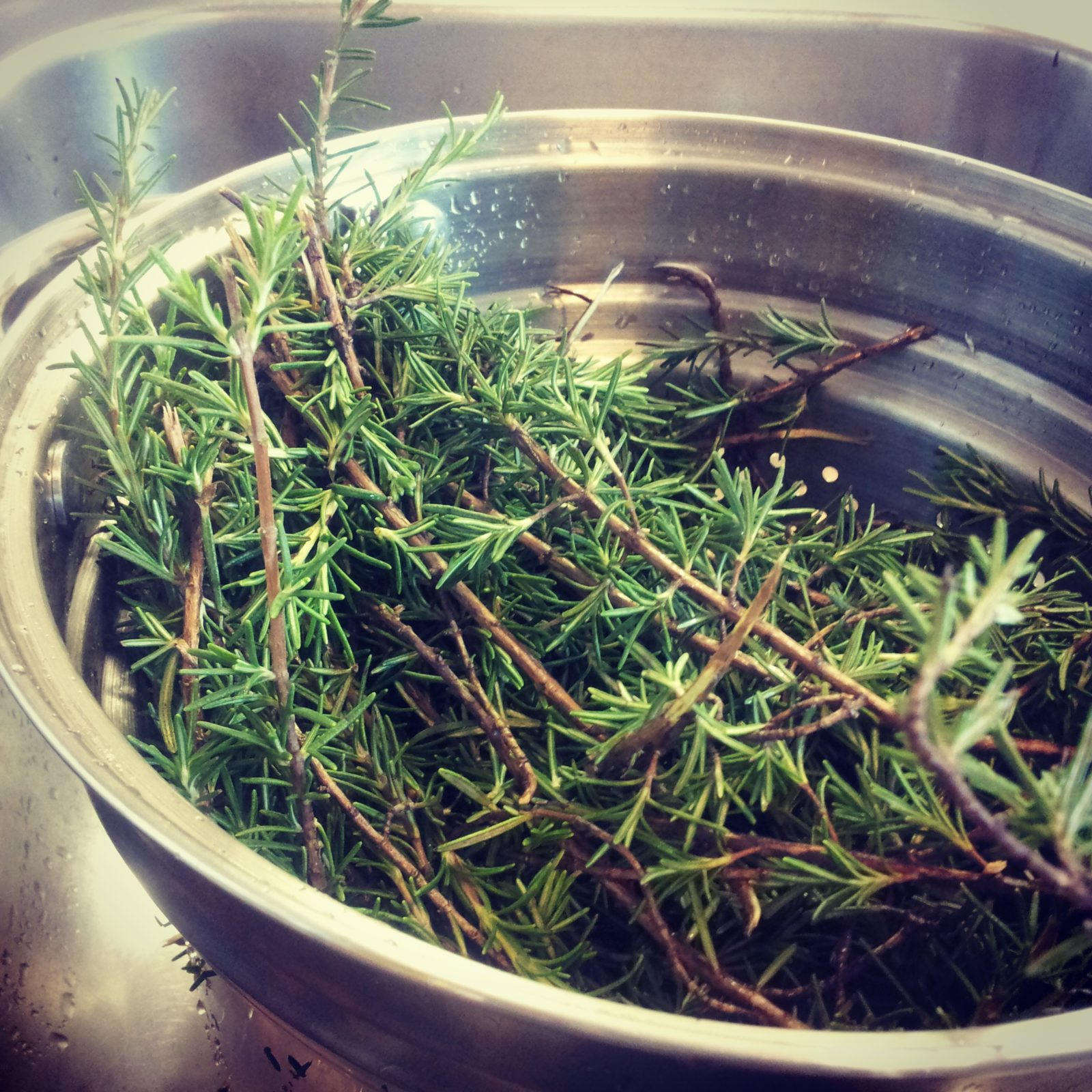 Fresh rosemary springs for natural soaps by old factory soap company