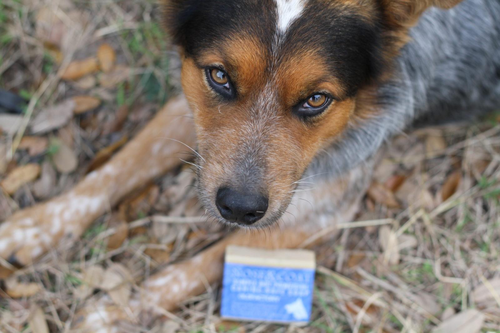 Rowdy Natural Dog Soap