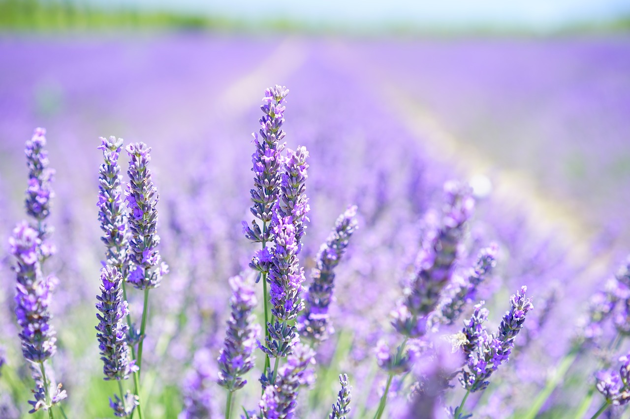 Blanco Lavender Soap in the Texas Hill Country